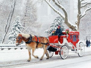 central-park-horse-carriage-rides-phoebettmh-travel---america----visiting-new-york-during-the-holidays-5bttkmdf